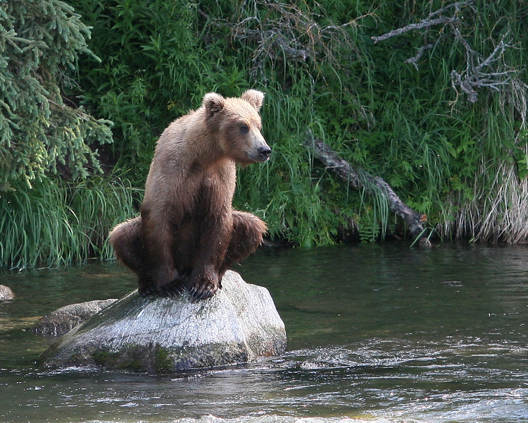 The young bears would love to sit on the rocks!