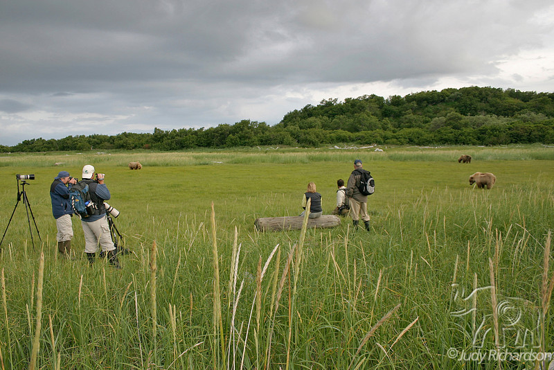 Group watching bears in a Hallo Bay meadow at Katmai National Park
