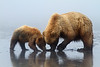 Brown Bears, Lake Clark National Park, Alaska