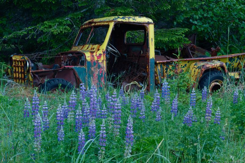Rusty Trucks, Lake Clark, Alaska