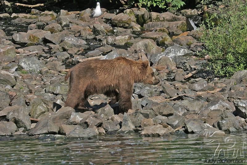 Bear by Creek