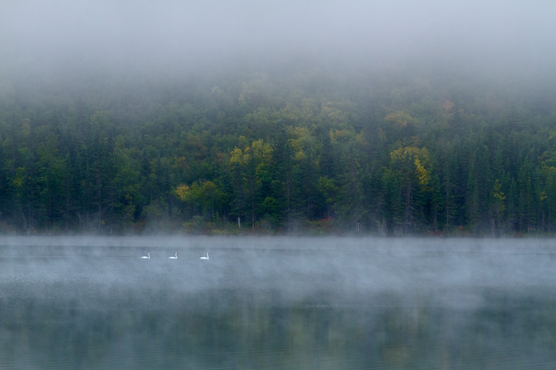 Morning Fog & Swans, Town Lake, Chitina, Alaska
