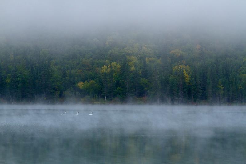 Morning Fog & Swans, Town Lake, Chitina, Alaska