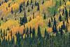 Autumn Colors, McCarthy Road, Wrangell - St. Elias National Park, Alaska