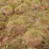 Tussock grass is like grass-covered bowling balls, often with water in between.  This is the dominant tundra vegetation.  The ground in between the tussocks is usually heather and flowers.