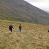 From a distance the tundra looks like easy walking, but it is really very slow going because of the tussock grass.