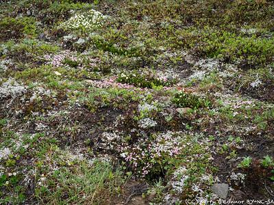 Tundra kalaidoscope