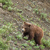 The 2nd cub then climbed the ridge.