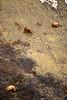 AK-1991-s080a Denali bears slide