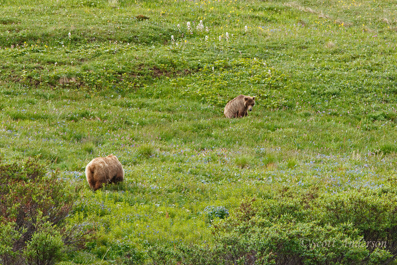 Eventually we hopped on another bus and found these bears a couple of minutes later.