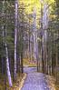 Woodland trail near the Denali visitors center.
