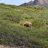 Denali National Park, Alaska