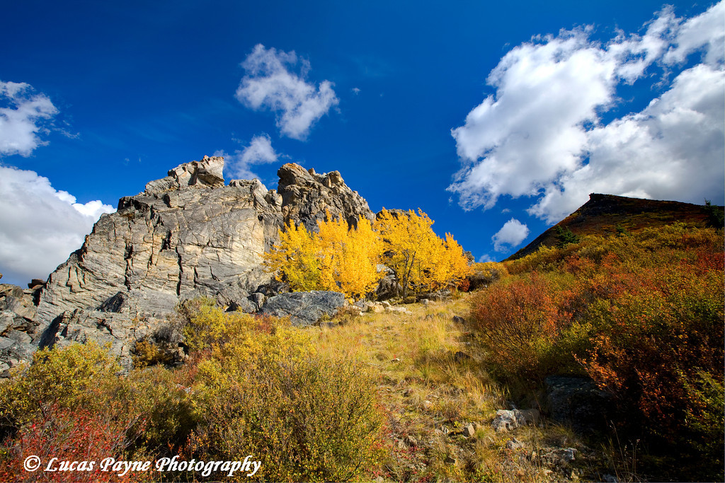 Fall colors at Denali National Park<br /> September 02, 2010