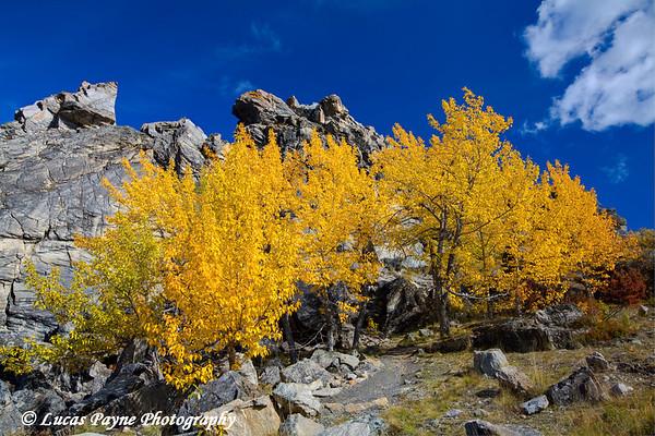 Fall colors at Denali National Park<br /> September 02, 2010