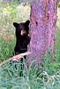 AK-1986-S090a-roc black bear