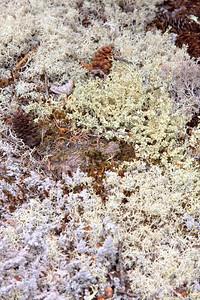 ... more lichen ...