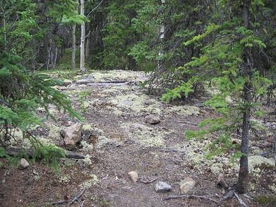 Field o' Lichen