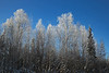 Murphy Dome ~ Icy Trees Sparkling in Sunshine