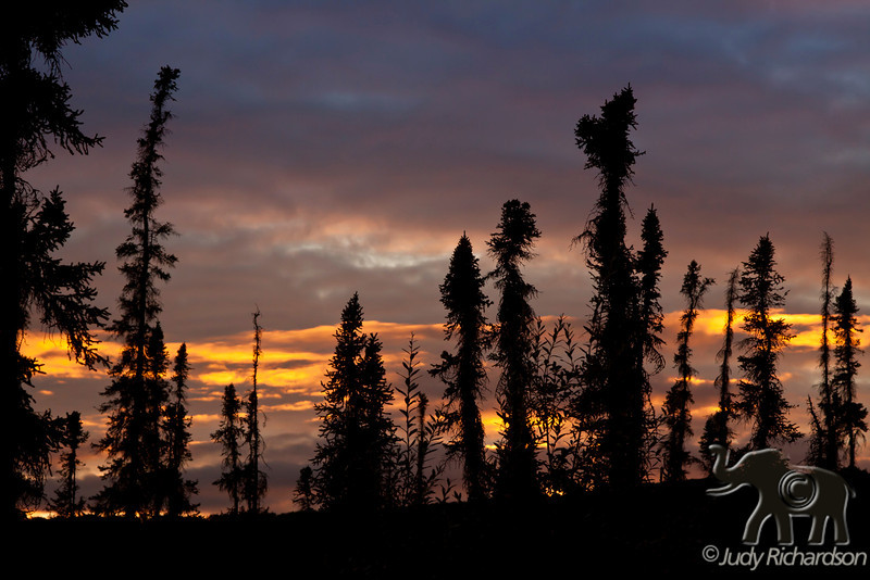 Close to mid-night in Fairbanks, Alaska