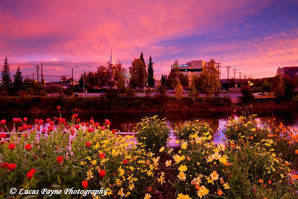 Flowers in downtown Fairbanks, Alaska at sunrise.<br /> September 07, 2010