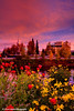 Flowers in downtown Fairbanks, Alaska at sunrise.<br /> September 07, 2010
