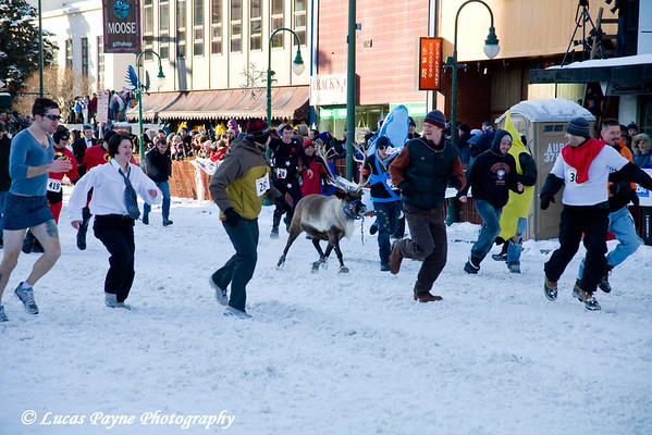 The 2nd Annual Fur Rondy Running of the Reindeer<br /> Anchorage, Alaska<br /> March 1, 2009