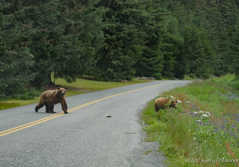 Momma Bear checking on the kids