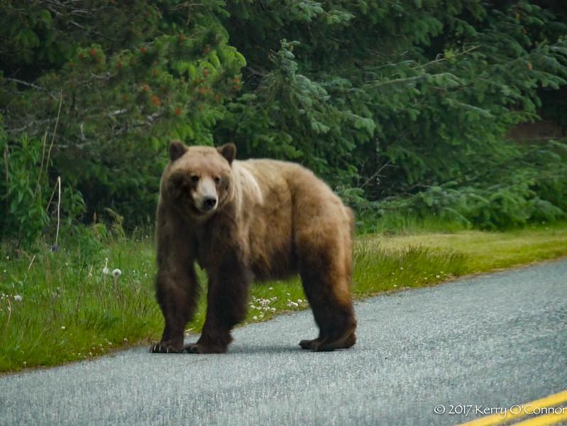 Good looking bear