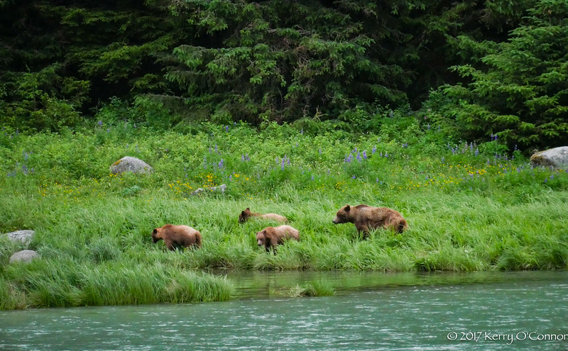 Bear Family Chilkoot Inlet