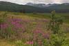 Tatshenshini - Alsek Wilderness Provincial Park, B.C. Canada