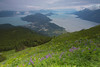 Haines Alaska from Mt. Ripinski