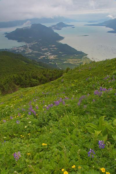 Haine & Chilkat Peninsula, Alaska