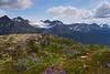 Lupine & AB Mountain Trail