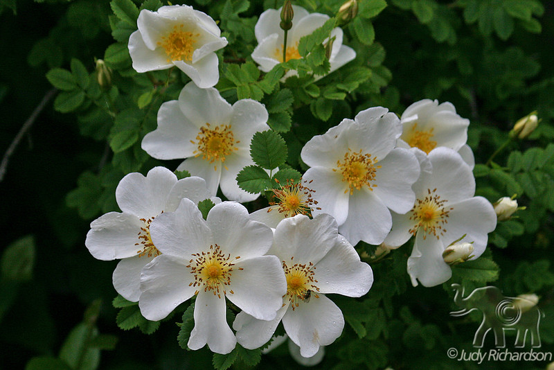 Cloudberry cluster