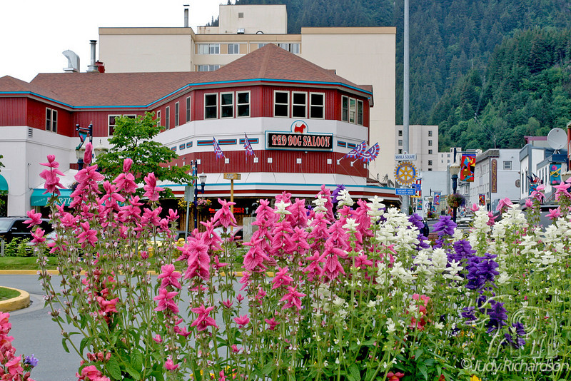 Flowers close to dock gathering place outside the Red Dog Saloon in Juneau