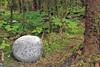 Round boulder in forest