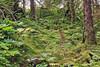 Bear path in Mendenhall