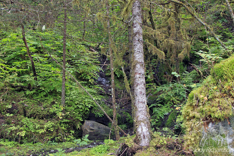 Fern and Moss in forest