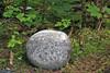 Round rock in the forest around Mendenhall glacier