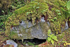 Rock with moss and ferns growing on top and around