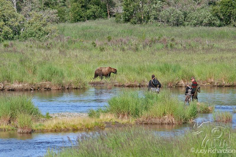 Close encounter in the stream