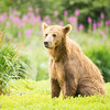 Bear in a beautiful setting...another rotten day in paradise!