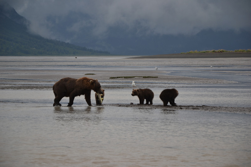 Katmai Lake Clark