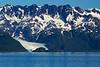 Pederson Glacier, Aialik Bay, Kenai Fjords National Park, Alaska