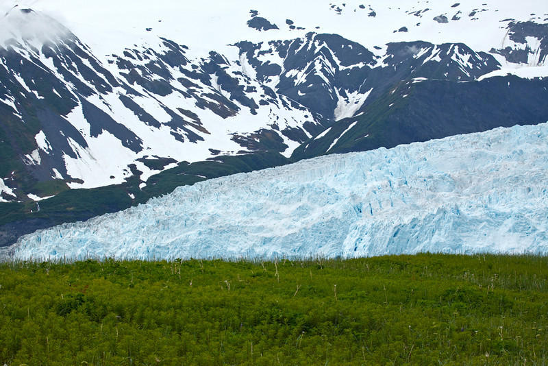 The landscape surrounding the glacier is full of lush greenery, beautiful wildflowers and bears.