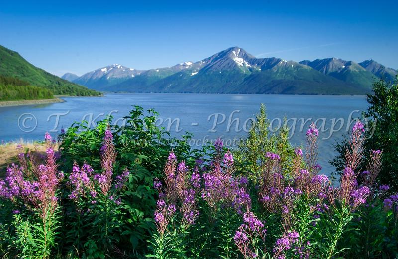 A scenic view in the Kenai Peninsula, Alaska, USA.