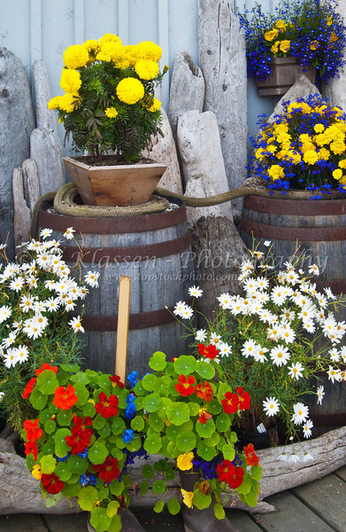 Decorative wooden barrels, drftwood and flowers on the boardwalk on the Kenai peninsula in Homer, Alaska, USA, America.