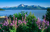 A scenic view in the Kenai Peninsula, Alaska, USA.