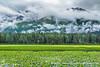 Milepost 15, Seward Highway, Alaska