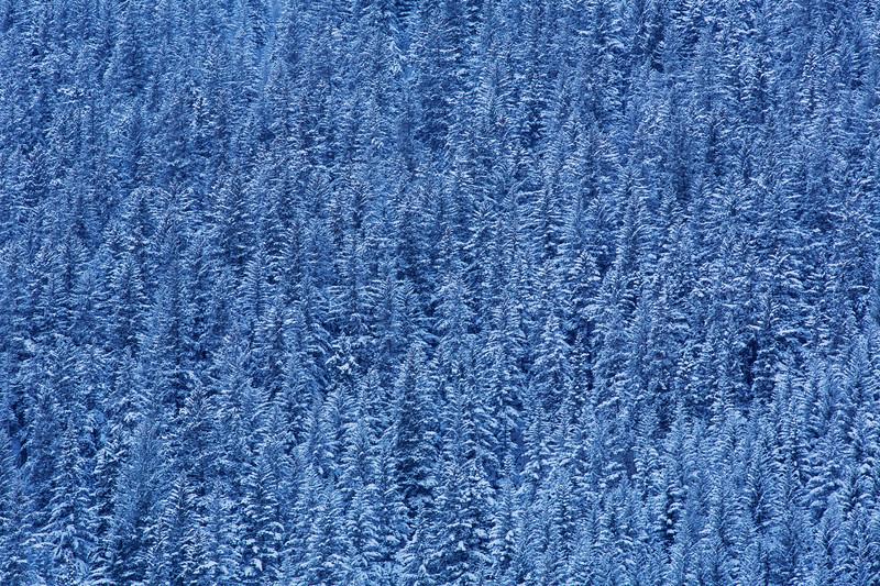 Snowy Trees, Seward, Alaska